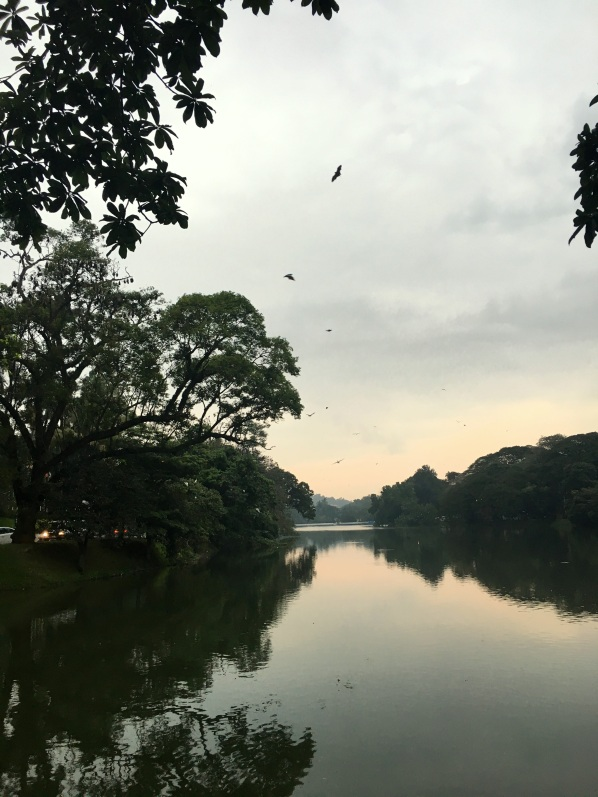 Bats above Kandy lake