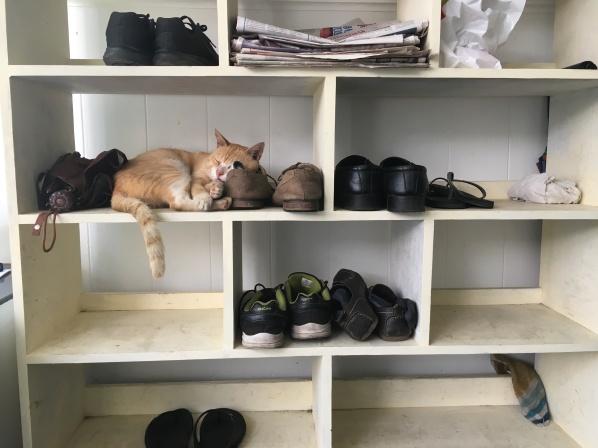 Cat between shoes