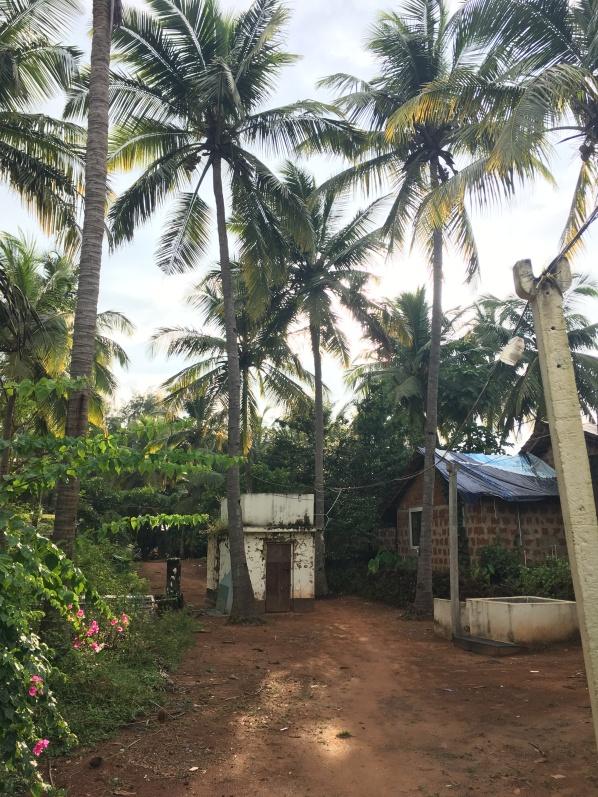 Lush India palms